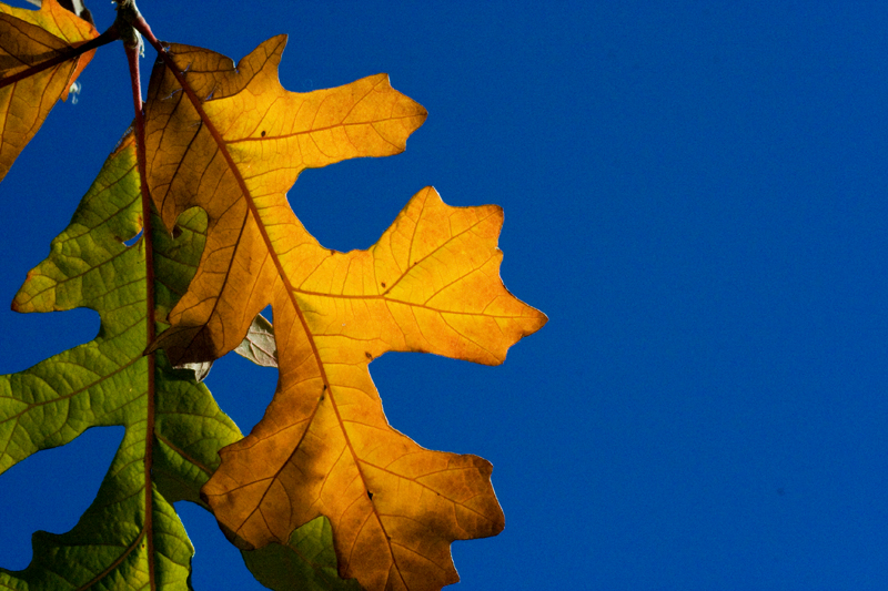 Leaves of different colors.