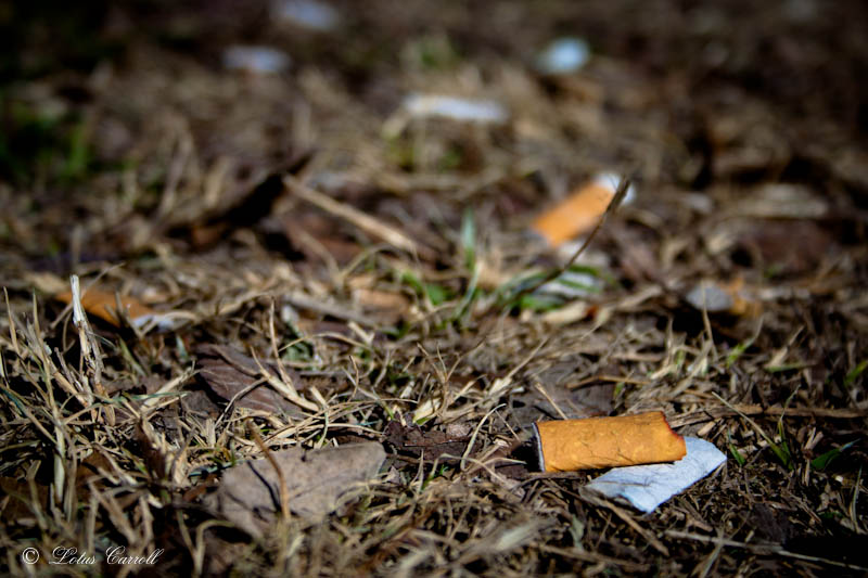 cigarette butts in grass