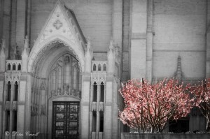 Grace Cathedral - so very beautiful, both inside and out.