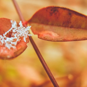 A Love Letter From Jack Frost